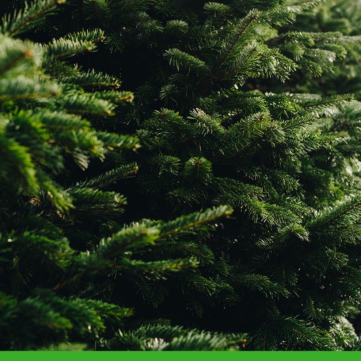 Predaj vianočných stromčekov