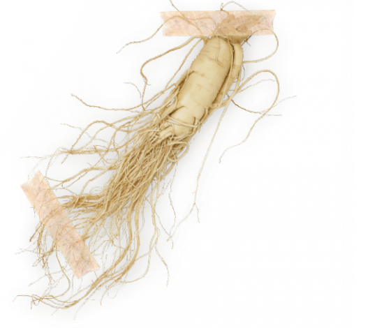 Żeń – szeń